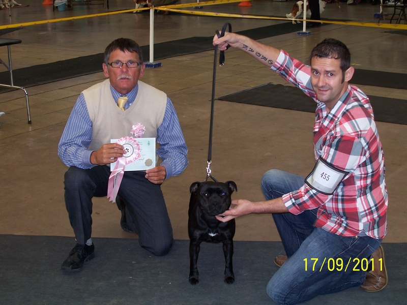 Daisy Marstaff Diamond Cut Bob + Terrier group 2 at Plymouth & district premier show
