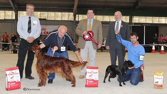 Res Best in Show, Liskeard & District Premier Open Show,JudgeGordon Haran, Pichttp://www.dewerstonephotography.co.uk/